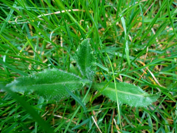 Weed In Grass 1143716