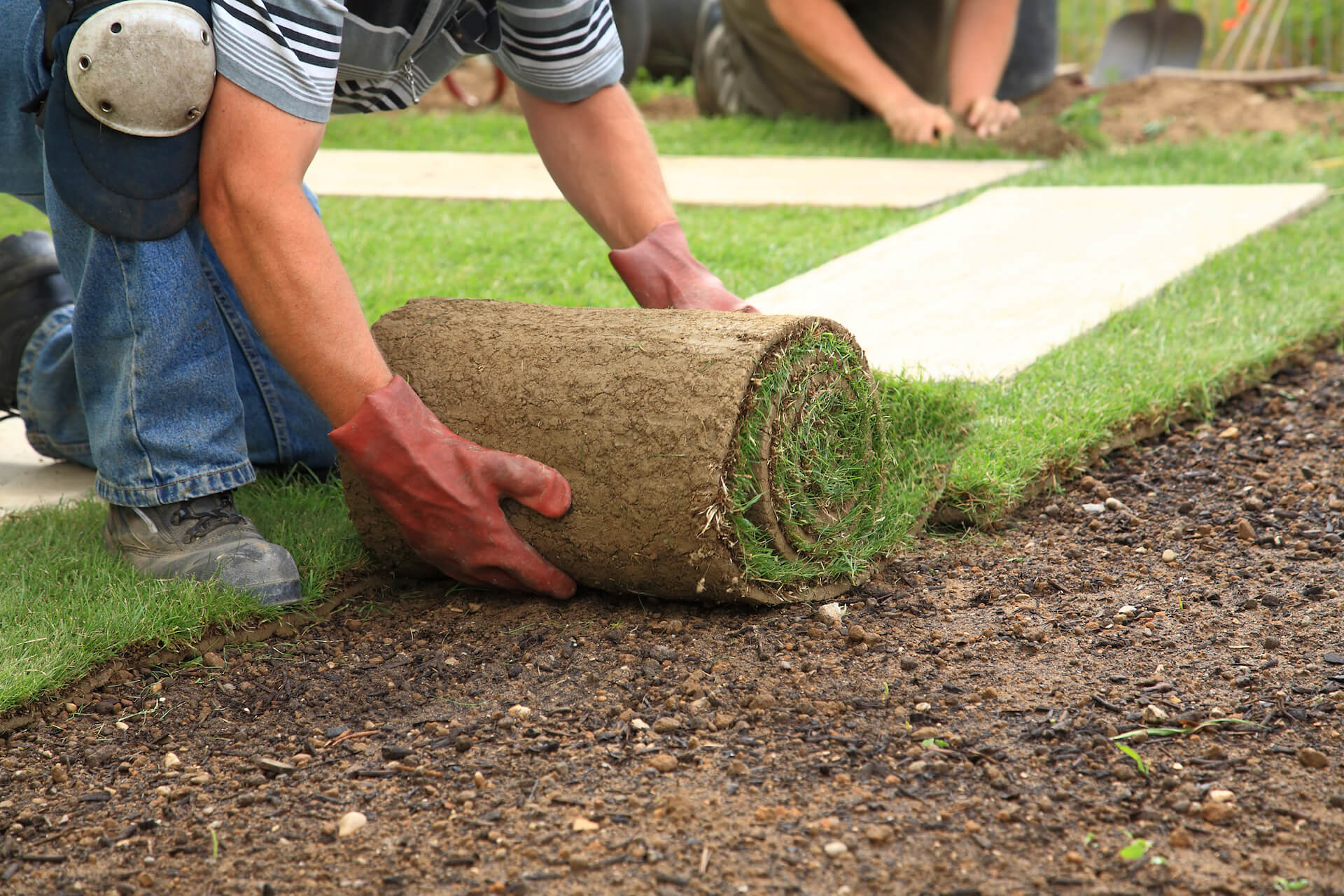 All About Sod!
